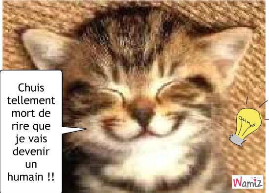 Chats mignons et mort de rire - Photo de chaton rigolo ...