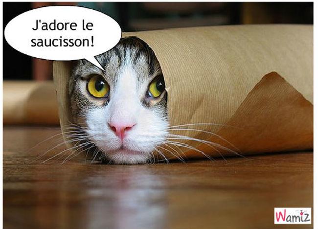 Le chat-saucisson, lolcats réalisé sur Wamiz