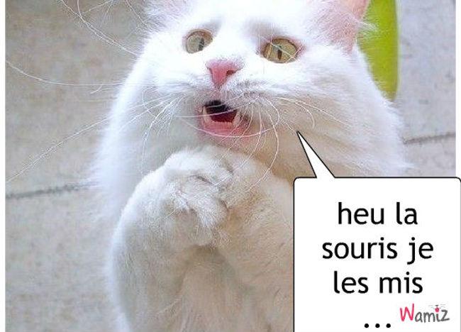 le chat souris, lolcats réalisé sur Wamiz