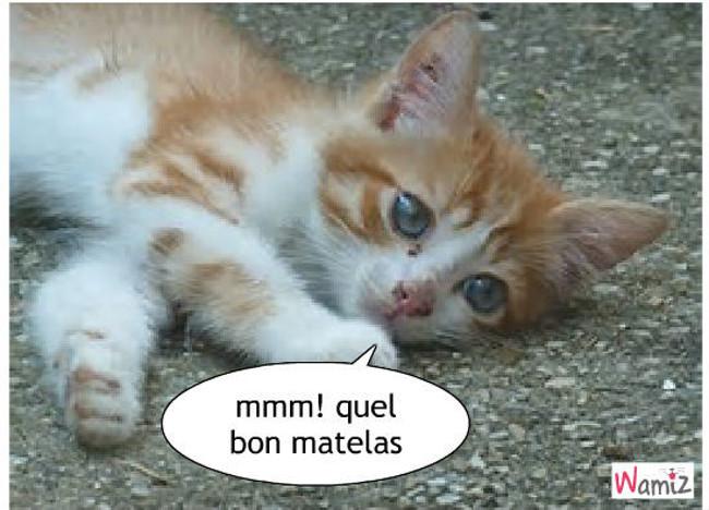 le chat vs matela, lolcats réalisé sur Wamiz