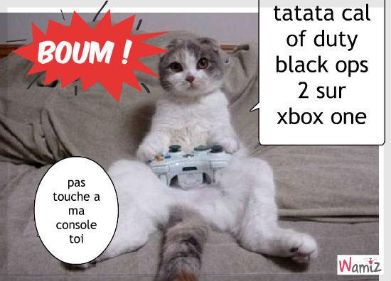 le chats acro a la console, lolcats réalisé sur Wamiz