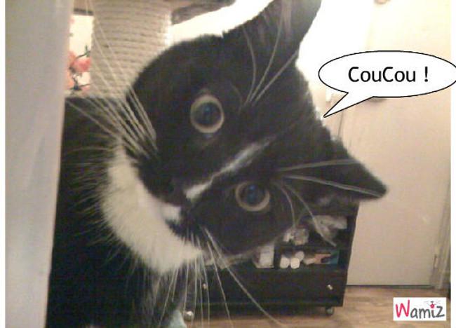 le chatsurprise !, lolcats réalisé sur Wamiz