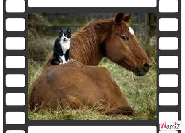 le cheval , lolcats réalisé sur Wamiz