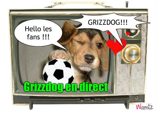 Le chien de Grizzman, lolcats réalisé sur Wamiz