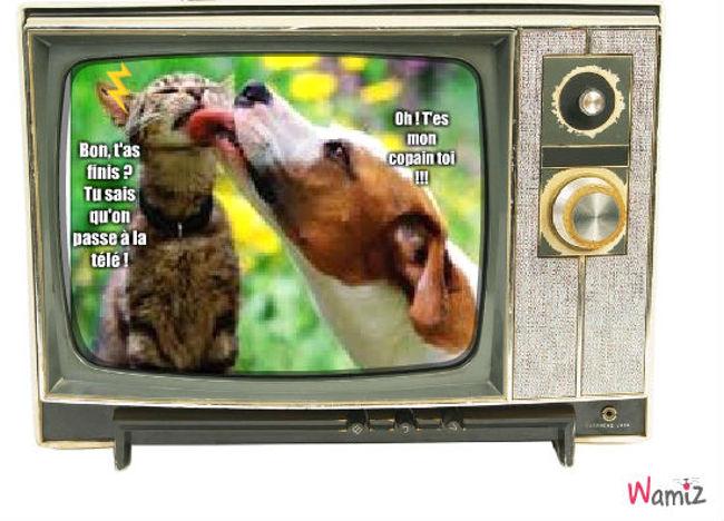 Le chien embête le chat..., lolcats réalisé sur Wamiz