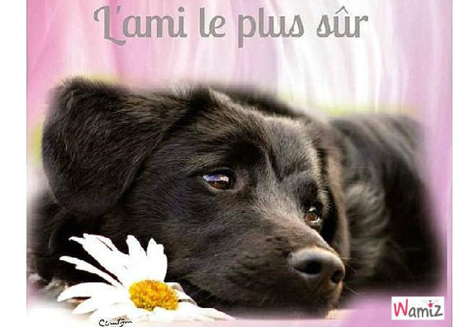Le chien fidèle, lolcats réalisé sur Wamiz
