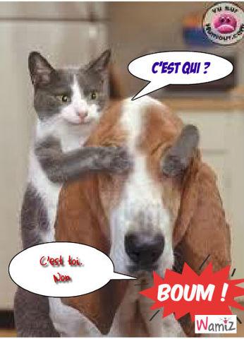 Le chien, Le chat, lolcats réalisé sur Wamiz