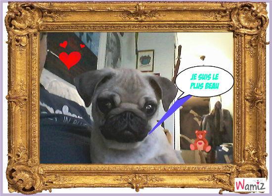 Le chien le plus beau du monde!!, lolcats réalisé sur Wamiz