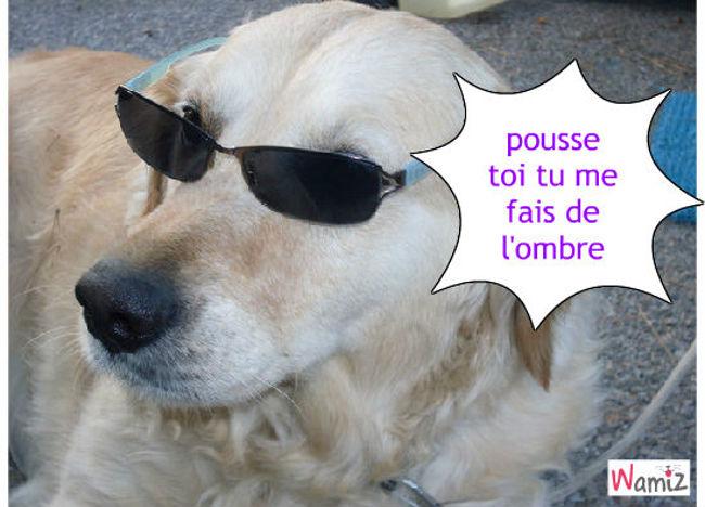 le chien qui fait bronzette, lolcats réalisé sur Wamiz