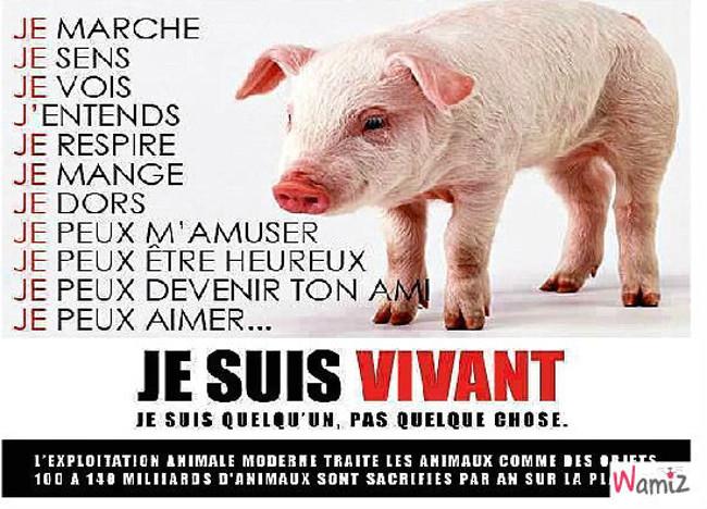 Le cochon est aussi intelligent que le chien, lolcats réalisé sur Wamiz
