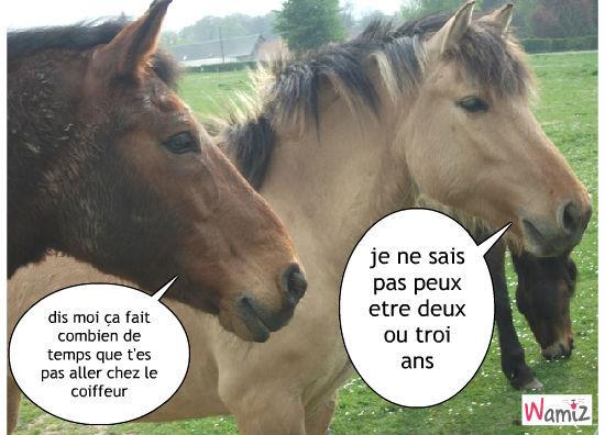 Coiffure pour chevaux concours