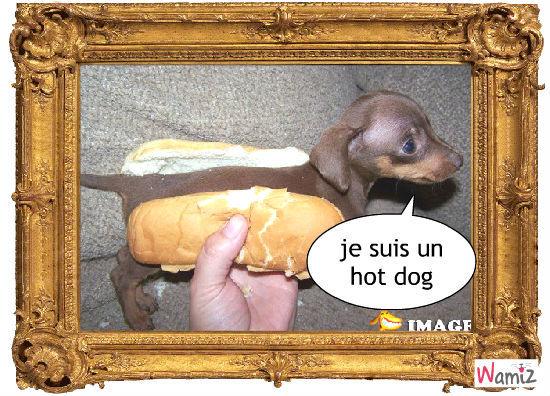 le fameux hot dog, lolcats réalisé sur Wamiz