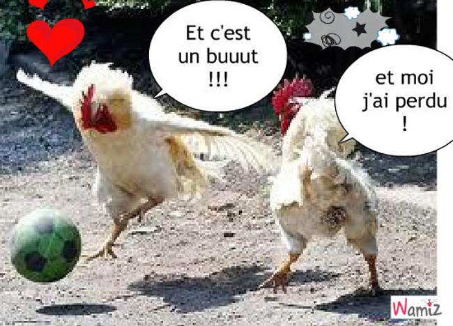 le foot des poulets, lolcats réalisé sur Wamiz