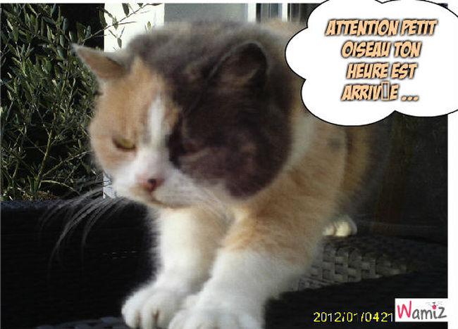 Le grand méchant chat, lolcats réalisé sur Wamiz