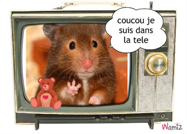 le hamster, lolcats réalisé sur Wamiz