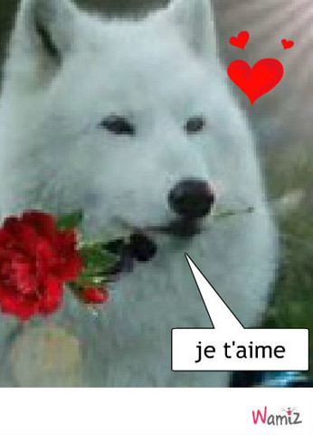 le husky  amoureux, lolcats réalisé sur Wamiz