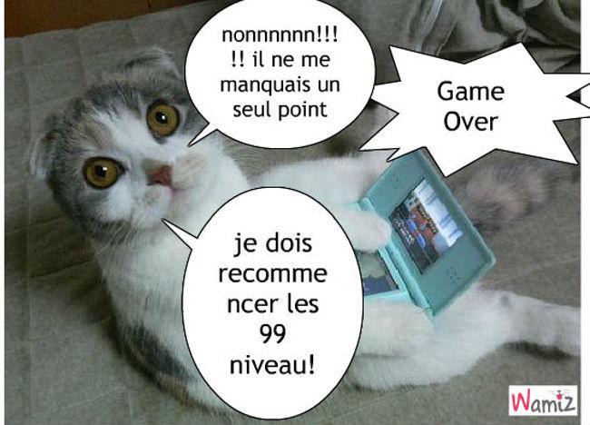 le jeu du chat, lolcats réalisé sur Wamiz