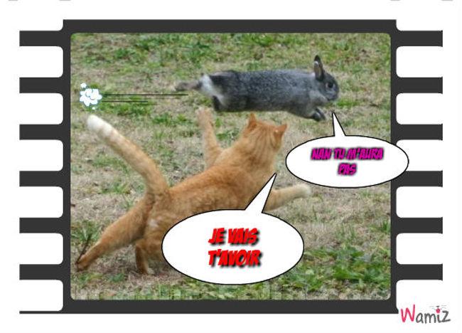 Le lièvre et le chat, lolcats réalisé sur Wamiz