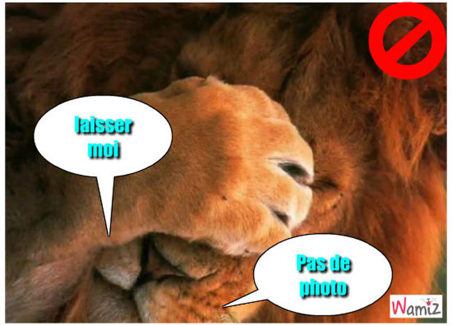 Le lion , lolcats réalisé sur Wamiz