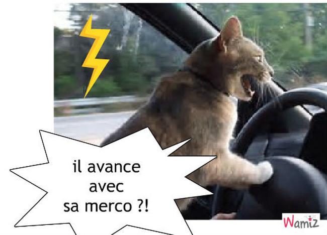 le petit chat furieux, lolcats réalisé sur Wamiz