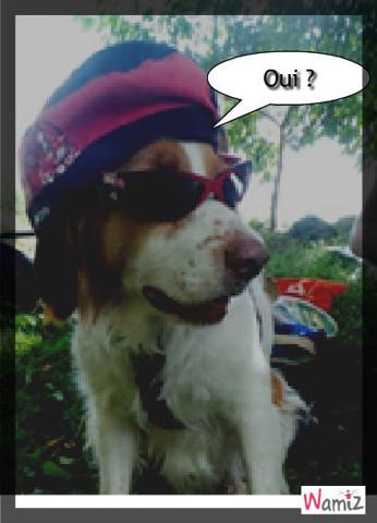 Le plus cool de tous les chiens, lolcats réalisé sur Wamiz