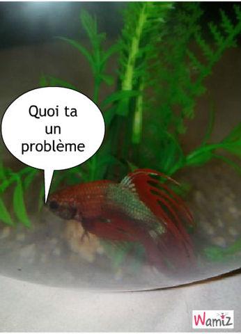 le poisson, lolcats réalisé sur Wamiz