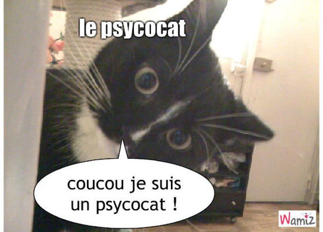 le psycocat, lolcats réalisé sur Wamiz