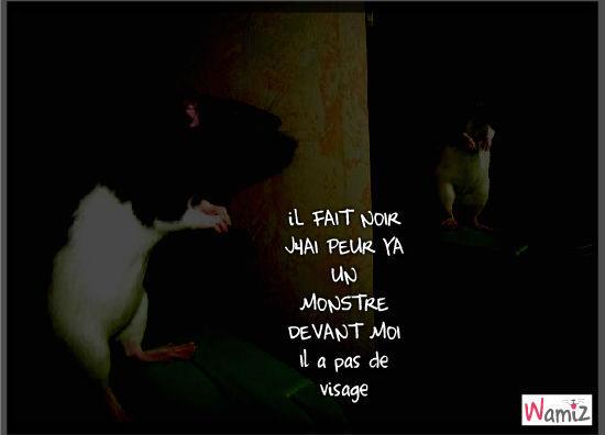 le rat et le monstre au visage cacher, lolcats réalisé sur Wamiz