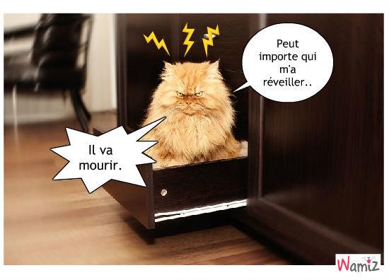 Le réveil du chat, lolcats réalisé sur Wamiz