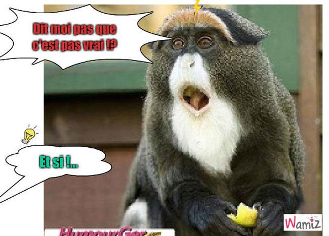 le singe, lolcats réalisé sur Wamiz
