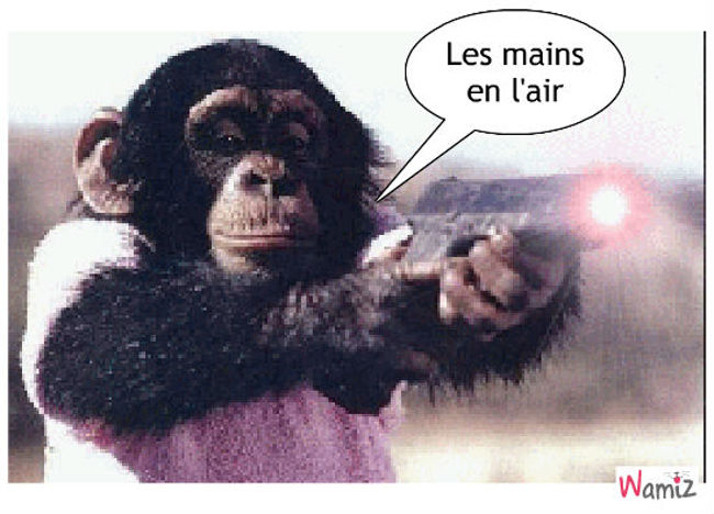 le singe qui tue, lolcats réalisé sur Wamiz