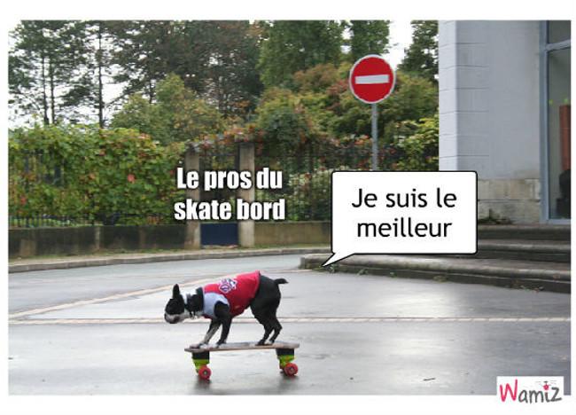 le skate bord, lolcats réalisé sur Wamiz