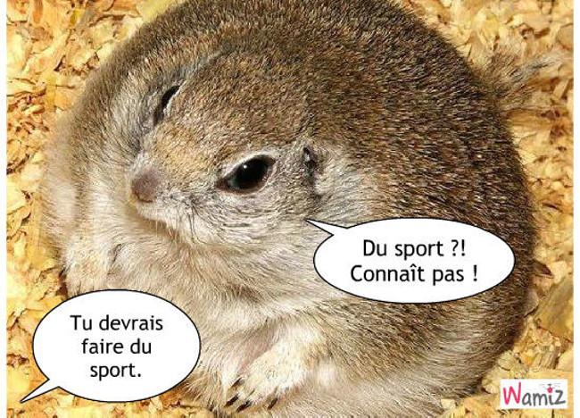 Le sport, activité inconnue !, lolcats réalisé sur Wamiz
