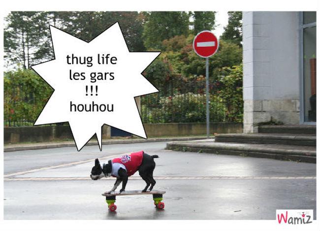 le thug, lolcats réalisé sur Wamiz