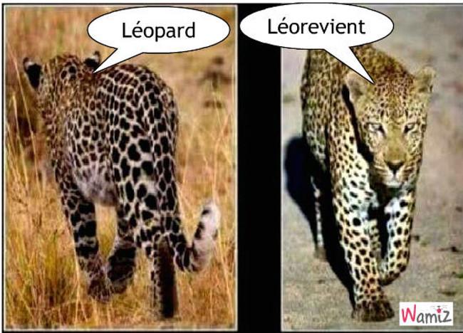 Léopard, lolcats réalisé sur Wamiz