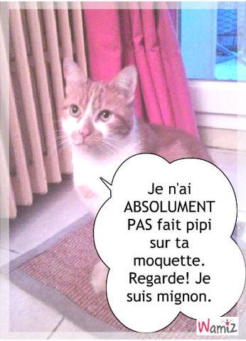 Pipi tooniz bande dessin e bd et photo personnalis e - Chat fait pipi sur le lit ...