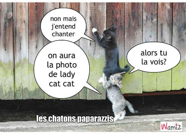 les chat paparazzis, lolcats réalisé sur Wamiz