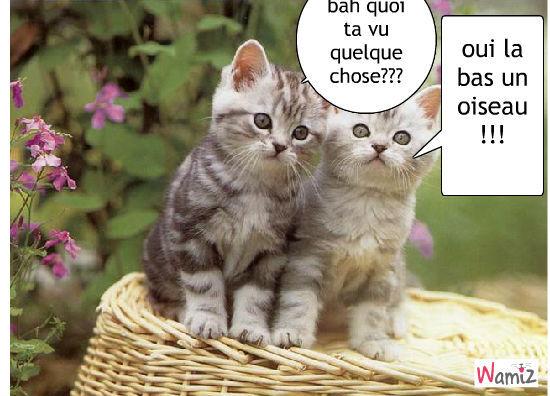 Chats tr s mignons - Image de chaton trop mimi ...