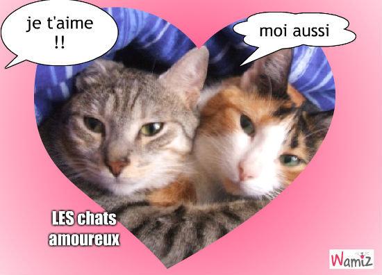 Les chats amoureux, lolcats réalisé sur Wamiz
