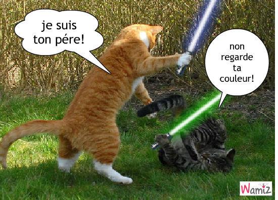 Présentation de P Felyne Les-chats-font-du-cinema-51212