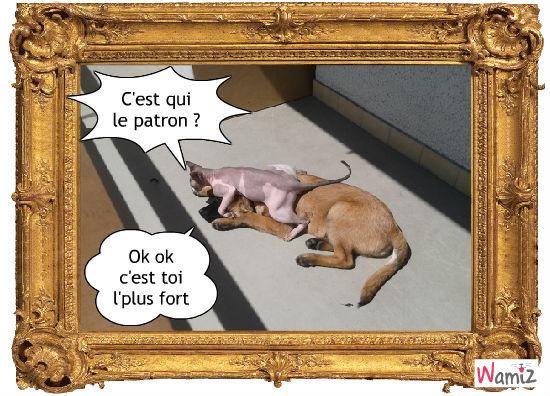 Lolcats fran ais bd et photo personnalis e d 39 animaux avec - Loi sur les chats et le voisinage ...