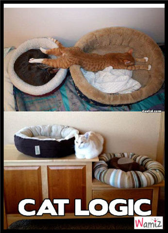 les chats ne sont pas toujours logiques..., lolcats réalisé sur Wamiz
