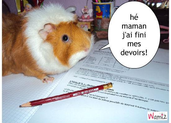 les devoirs d'un cochon d'inde!, lolcats réalisé sur Wamiz