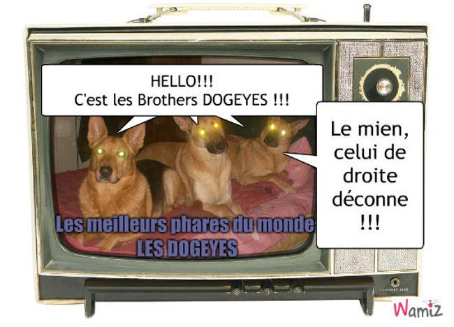 Les DOGEYES, lolcats réalisé sur Wamiz