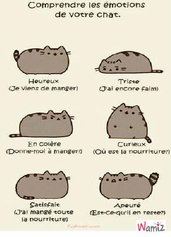 Les émotions du chat, lolcats réalisé sur Wamiz