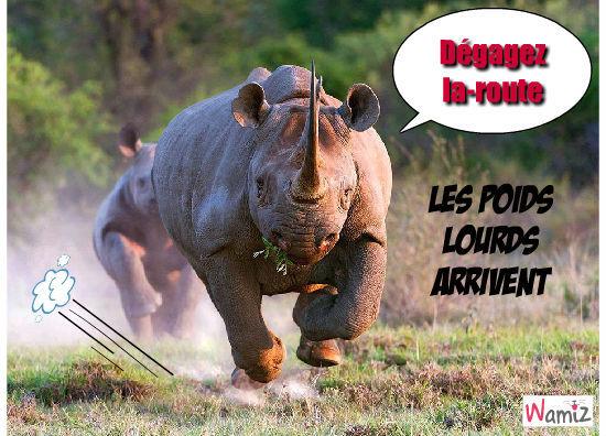 Rsultat de recherche dimages pour rhinocros humour