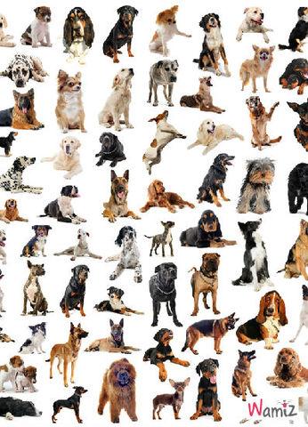 Les races de chien, lolcats réalisé sur Wamiz