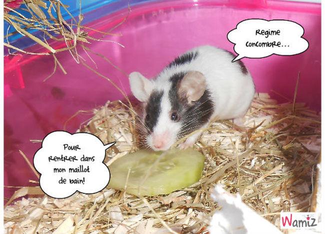 Les souris aussi veulent etre les plus jolies sur la plage!, lolcats réalisé sur Wamiz