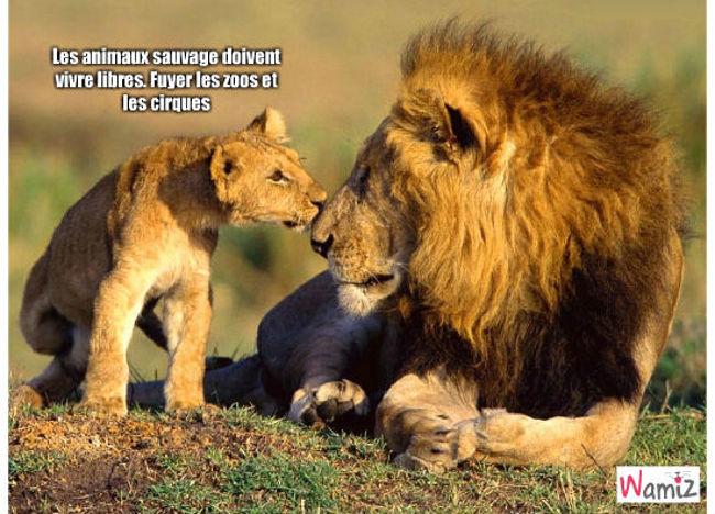 lions, lolcats réalisé sur Wamiz
