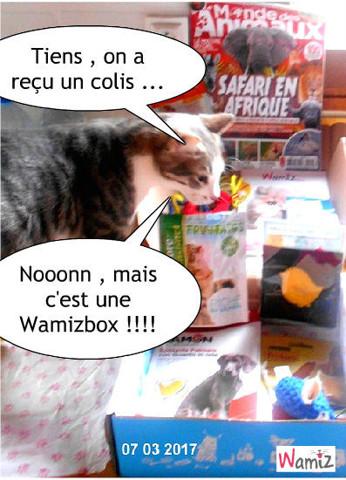 Livraison de colis, lolcats réalisé sur Wamiz